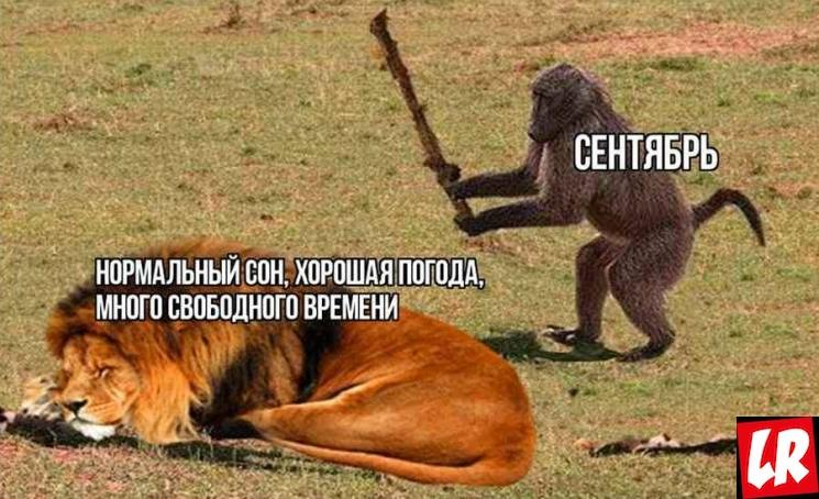 фишки дня, мем