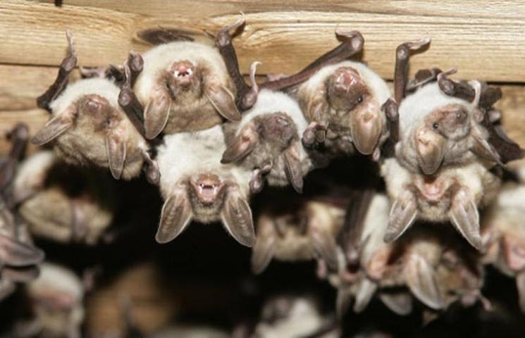 фишки дня - 25 августа, День летучих мышей