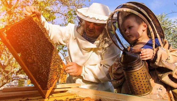 фишки дня - 19 августа, День пчеловода, День пасечника