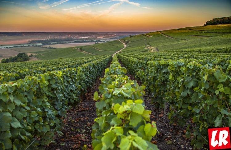 шампанское, Шампань, Франция, виноградники