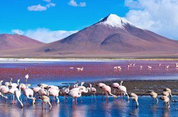 фишки дня, День весны Боливия, день мира
