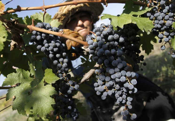 фишки дня - 13 сентября, праздник сбора винограда Румыния