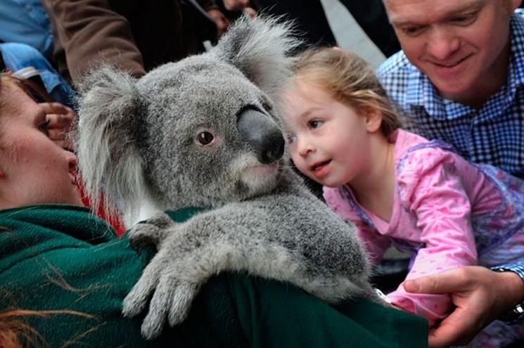 фишки дня - 7 сентября, День вымирающих животных Австралии