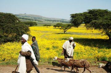 фишки дня, Энкукуташ, Новый год Эфиопия,