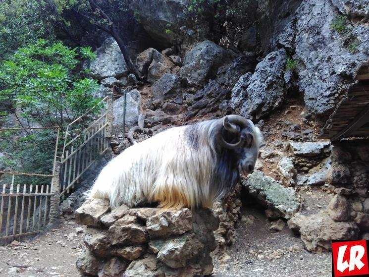 путешествие в Ливан, пещера Джейта