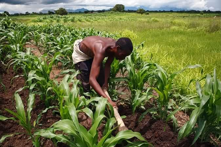 фишки дня - 16 октября, Африка, день продовольствия