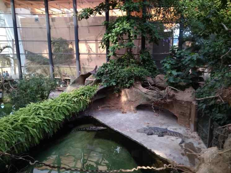 Вроцлавский зоопарк, Вроцлав, Африкариум