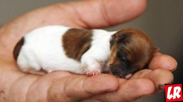 фишки дня - 4 октября, День защиты животных