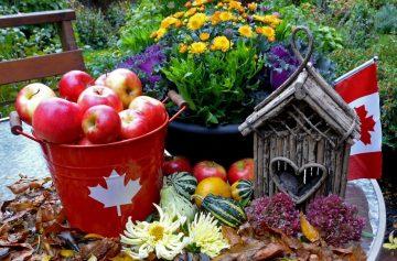 фишки дня, день благодарения Канада