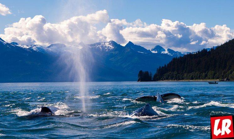 фишки дня - 18 октября, День Аляски, Аляска