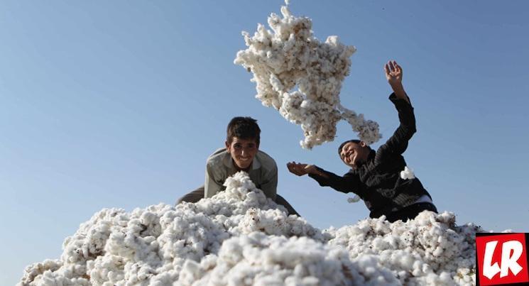 фишки дня - 25 ноября, день урожая Туркменистан, урожай хлопка