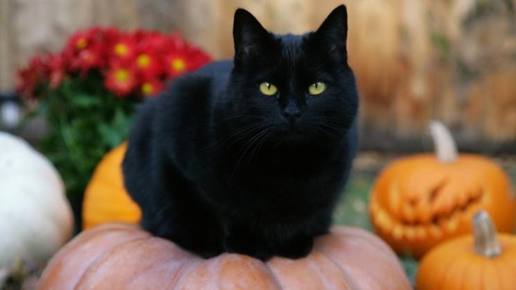 фишки дня - 17 ноября, День защиты черных кошек