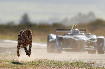 фишки дня, день гепарда