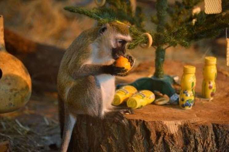 фишки дня - 14 декабря, день обезьян