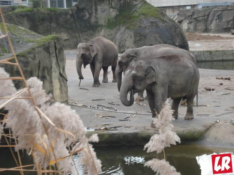 зоопарк Кельн, в Германию с детьми