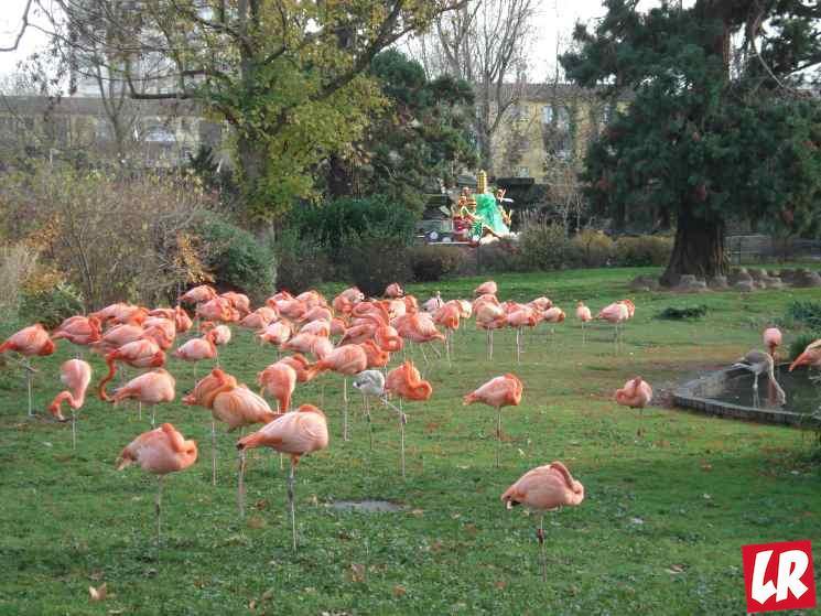 зоопарк Кельн, путешествие в Германию