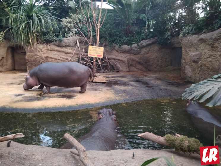 зоопарк Кельн