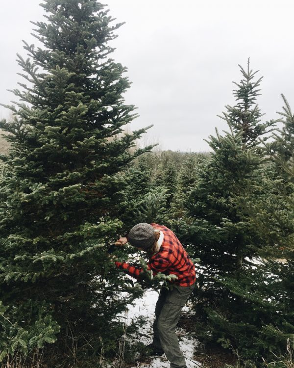 Как украинцам живется в Канаде, Канада, елки