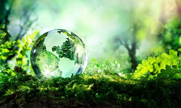Жизнь, отходы, экология, zero west, вторсырье