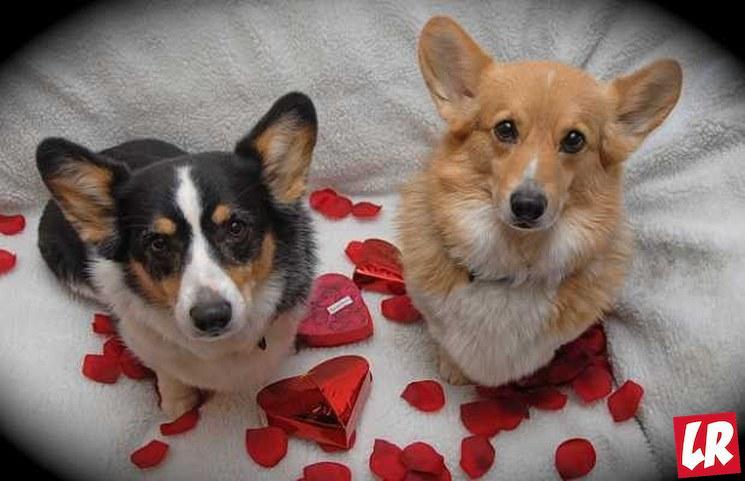 фишки дня - 14 февраля, день святого Валентина
