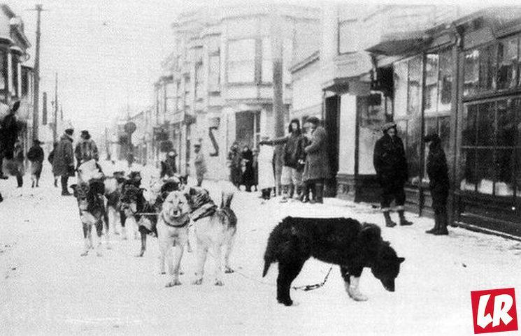 фишки дня - 2 февраля, день ездовых собак, великая гонка милосердия