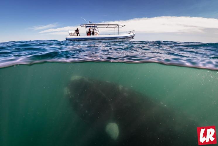фишки дня - 19 февраля, всемирный день китов