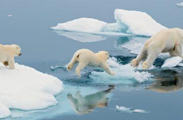 фишки дня, день белого медведя