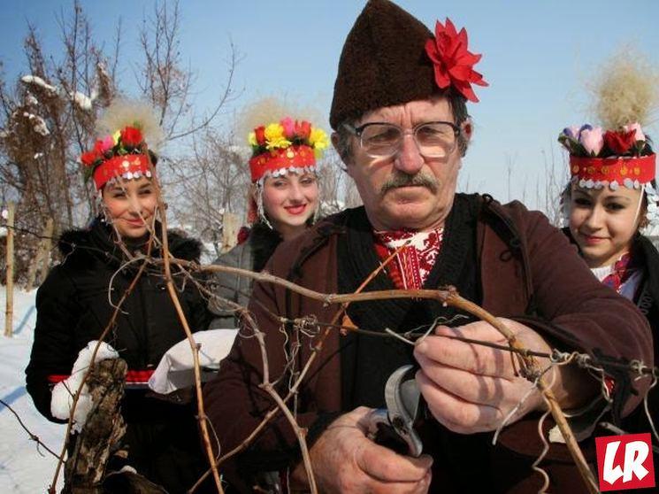 фишки дня - 14 февраля, День виноградарей Болгария, Трифон Зарезан