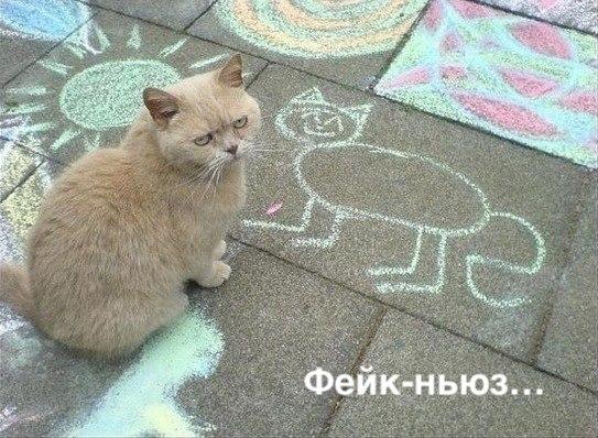 мем дня, фишки дня, кот, фейк ньюс