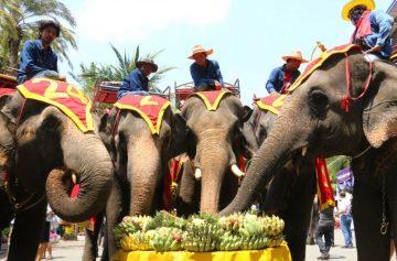 фишки дня, день тайского слона