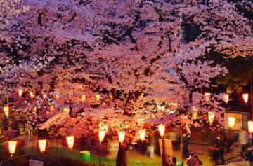 фишки дня, праздник цветения сакуры Япония