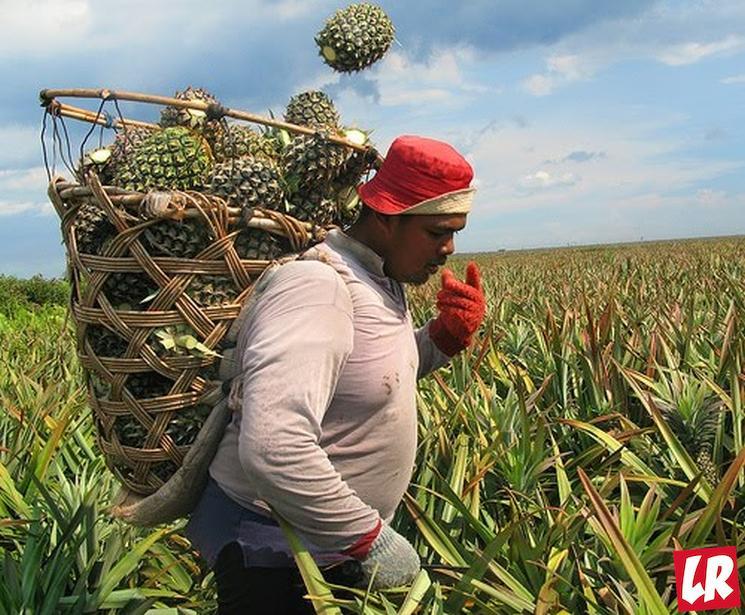 фишки дня - 12 марта, день ананаса
