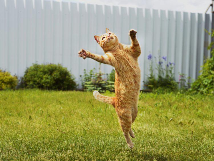 кошка, прыжок