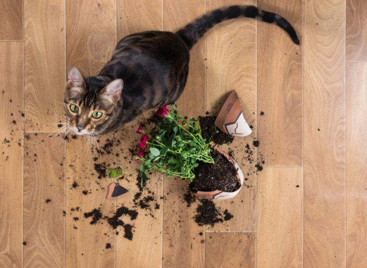 кошка, кот, разбил вазон