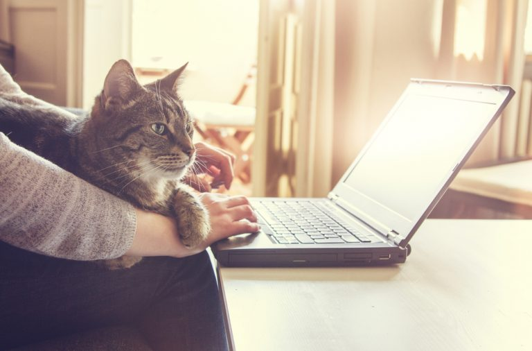 кошка, ноутбук, компьютер, работа для фрилансера