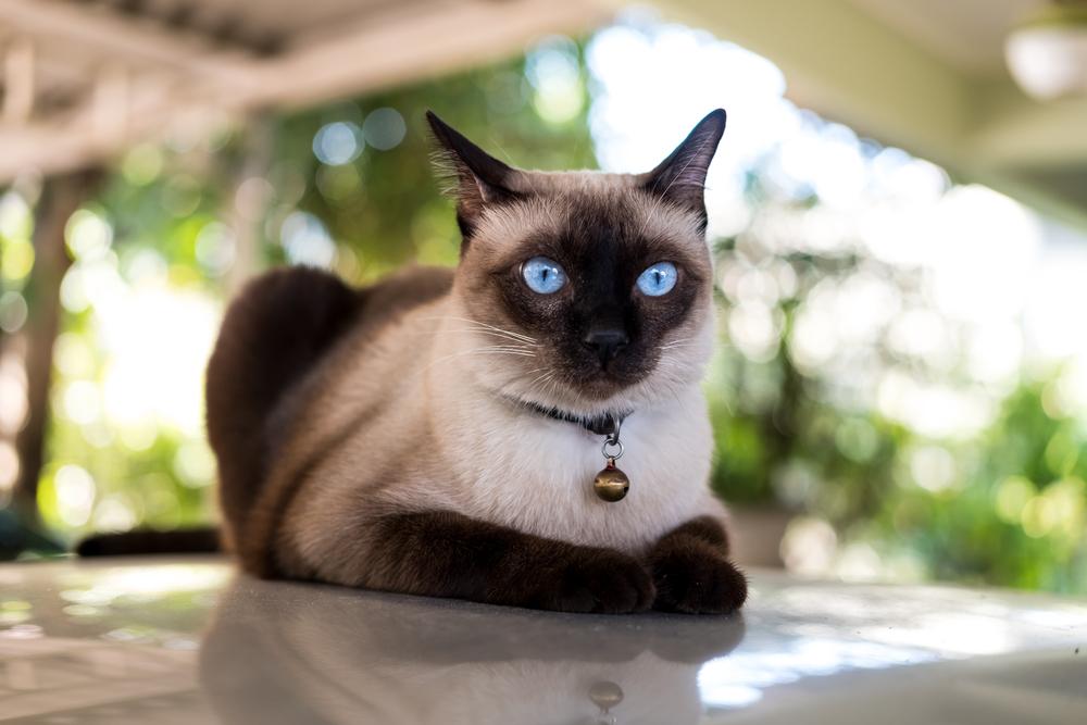 Кошки – история от античности до наших дней
