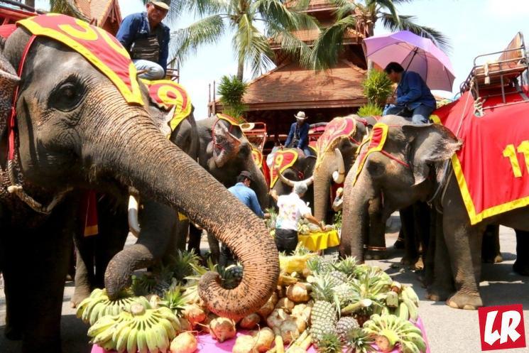 фишки дня - 13 марта, день тайского слона