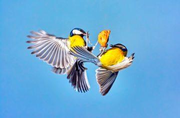 птицы, воробьи, орех