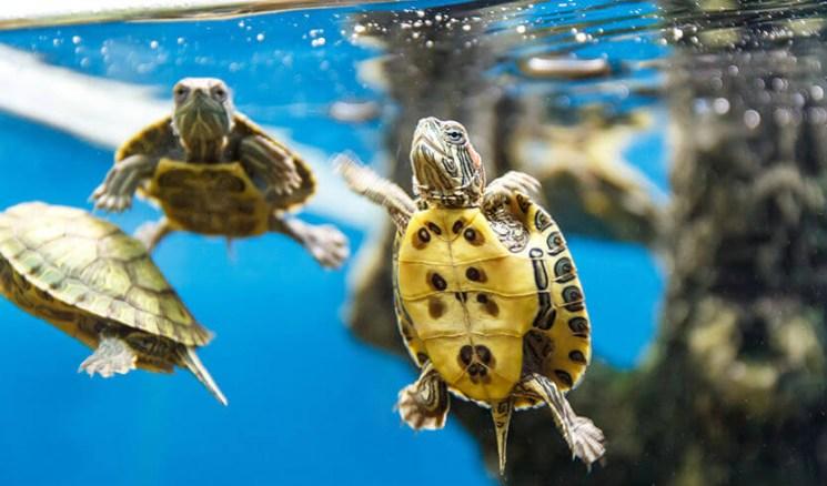 фишки дня - 23 мая, день черепах