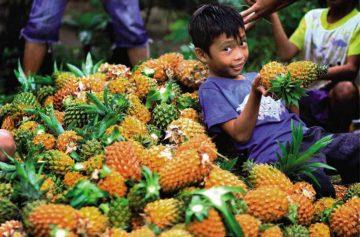 фишки дня - 2 июня, день ананаса Таиланд