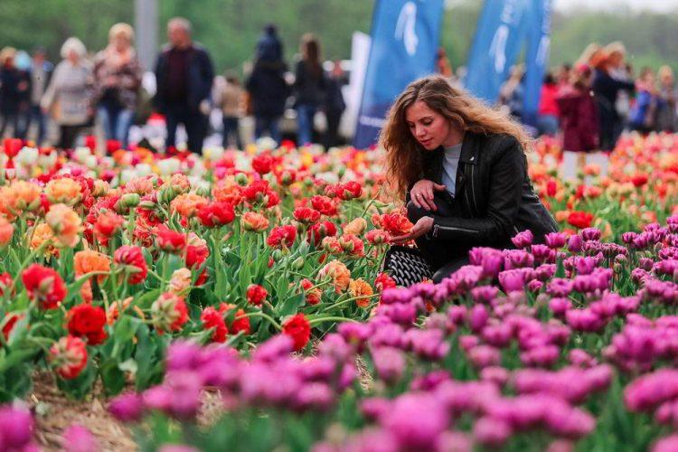 тюльпаны, цветы, волынская голландия, фестиваль тюльпанов