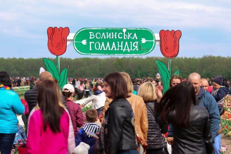 фестиваль тюльпанов, тюльпаны, цветы, волынская голландия