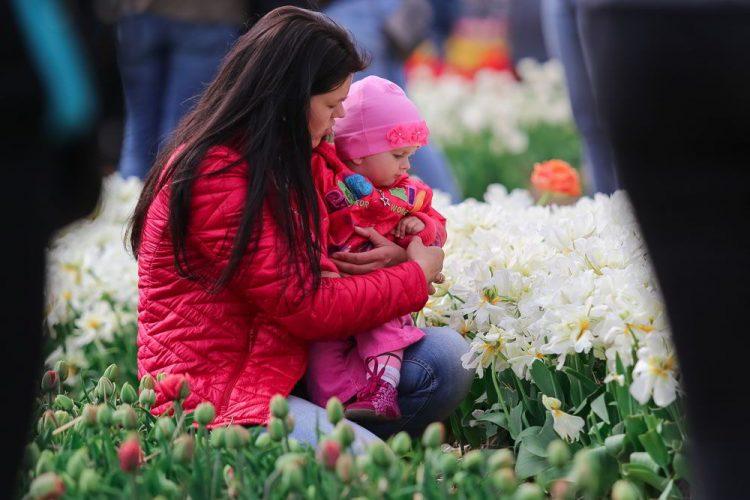 фестиваль тюльпанов, Украина