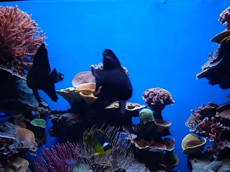 отдых на Майорке, Майорка аквариум