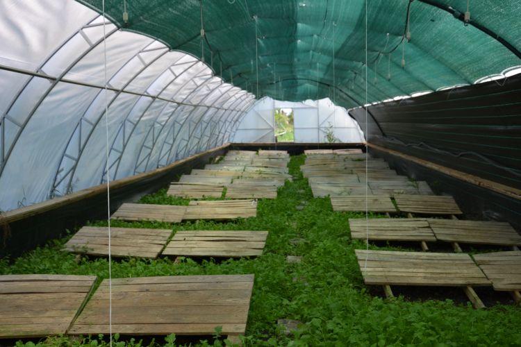 ферма, Полтава