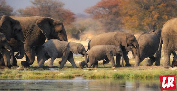 фишки дня - 20 июня, день слонов в зоопарках