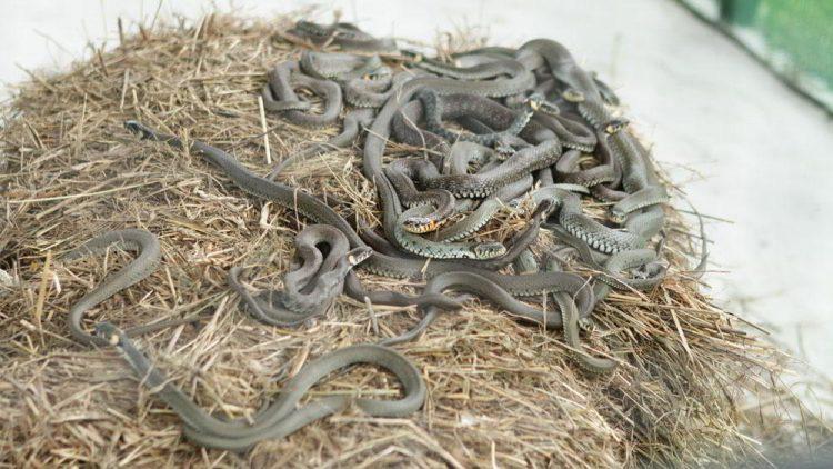 змеинная ферма змея улитка равлык