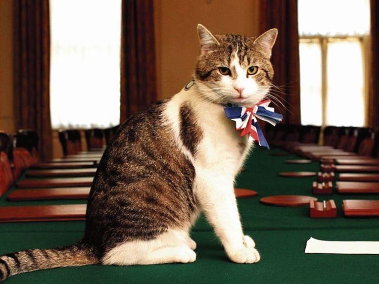 кот Ларрри, Британия