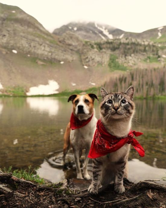 Балу и Генри, собака, кот, день кота