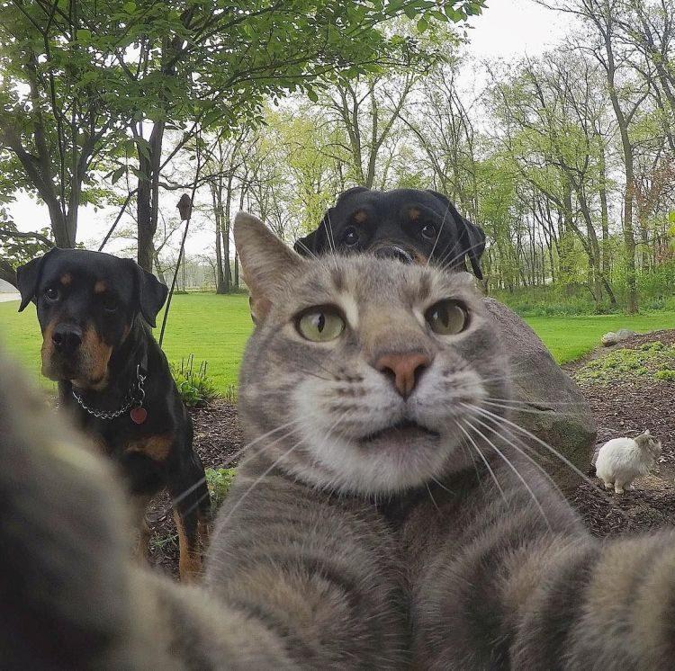 Менни, кот, селфи
